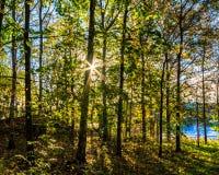 Полесье осени при солнце смотря прищурясь через деревья стоковые изображения