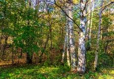 Полесье осени с изолированным деревом стоковые изображения