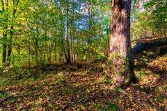 Полесье осени с изолированным деревом стоковые фото