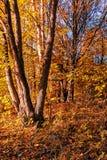Полесье осени с изолированным деревом стоковое фото rf