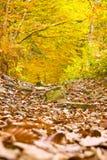 полесье осени цветастое Стоковые Изображения RF