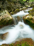 полесье потока Стоковое фото RF