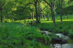 полесье потока Стоковое Фото
