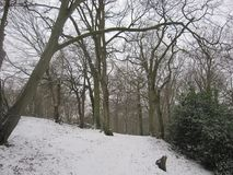 Полесья зимы стоковая фотография rf