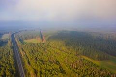 Полесья растя в сельском районе покрытом с туманом стоковые фото