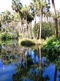 Полесья Флориды стоковая фотография rf