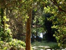 Полесья Флориды стоковое фото