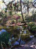 Полесья Флориды стоковое изображение rf