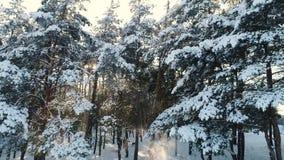 Полет в лес зимы сток-видео