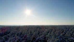 Полет в лес зимы видеоматериал