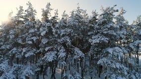 Полет в лес зимы акции видеоматериалы