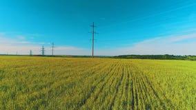Полет движения Arial около высоковольтных поляков и линий электропередач электричества на поле зеленой и желтой пшеницы сельском
