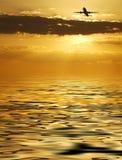 полет золотистый Стоковое фото RF