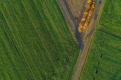 Полет и вид с воздуха трутня над кукурузным полем стоковые изображения