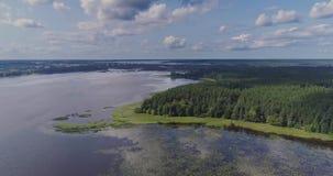 Полет и сосновый лес трутня морской водоросли лилий воды озера видеоматериал