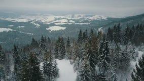 Полет над горами зимы, высокогорный луг - холмы покрытые с огромными соснами Лыжники нисходящи горой сток-видео