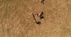 Полет над дикими лошадьми табунит на луге горы Природа гор лета дикая r сток-видео