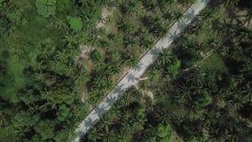 Полет над дорогой в джунглях на острове Koh Phangan видеоматериал