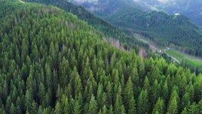 Полет над лесом в горах видеоматериал