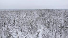 Полет над лесом зимы, воздушный взгляд сверху видеоматериал