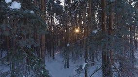 Полет над полем зимы видеоматериал