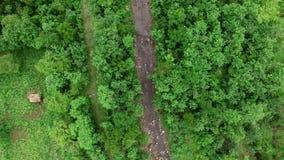 Полет над потоком реки в тропическом тропическом лесе видеоматериал