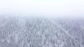 Полет над пургой в лесе снежной горы coniferous, туманной нетоварищеской погодой зимы сток-видео