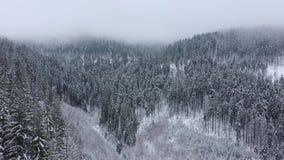 Полет над пургой в лесе снежной горы coniferous акции видеоматериалы