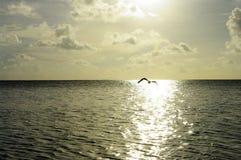 Полет птицы Стоковое Фото