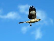 полет птицы Стоковые Фото