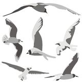 полет птиц Стоковое Фото