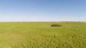 Полет трутня над полем травы с голубым небом акции видеоматериалы