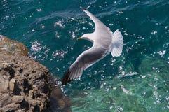 Полет чайки над морем стоковое изображение rf