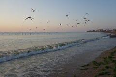 Полет чайок на восход солнца Стоковая Фотография RF
