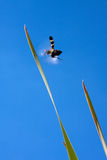 полет черепашки Стоковая Фотография RF