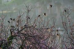 Полет starlings Стоковое Фото