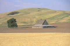 Поле амбара и пшеницы Стоковые Изображения
