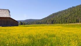 поле амбара цветет желтый цвет Стоковые Изображения RF
