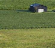 поле амбара Стоковая Фотография