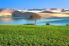 Поле арахиса озером лотос - Bau Trang на белых песчанных дюнах в Ne Mui, Phan Thiet, провинции Binh Thuan, Вьетнаме стоковое фото rf