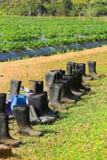 поле ботинок Стоковое Изображение RF