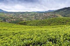Поле вала чая и огорода, Sri Lanka Стоковые Фото