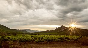 Поле виноградника Стоковые Изображения RF