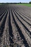 поле вспахало картошку Стоковое Фото