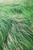 Поле высокой зеленой травы стоковые фото