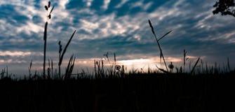 Поле в заходе солнца стоковое фото rf
