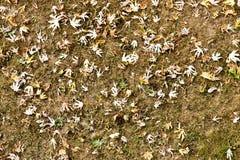 Поле в осени, с некоторыми листьями Стоковые Изображения RF