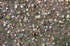 Поле в осени, с некоторыми листьями Стоковая Фотография
