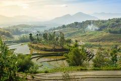 Поле горы и риса Стоковые Изображения