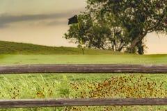 Поле для гольфа Техаса Стоковые Фотографии RF